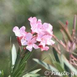 Blumen Sizilien